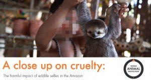 Amazon Report